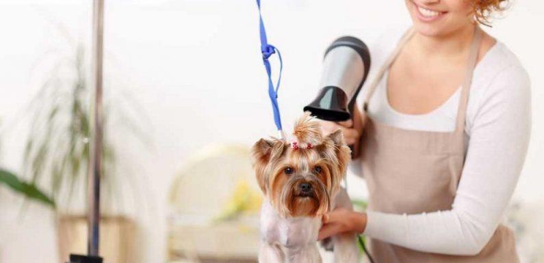 給寵物美容也太貴了!客觀事實確實這般嗎?